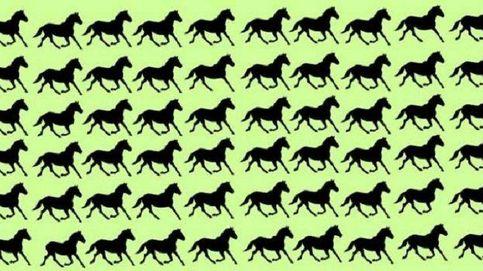 Acertijo viral: ¿eres capaz de encontrar a los seis caballos diferentes?