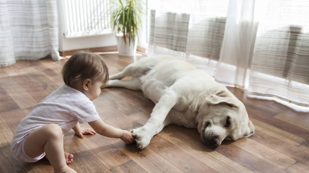 El perro más fiel: qué hace cuando su dueño va al colegio