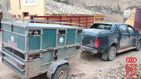 Denunciado un cazador por llevar 23 perros hacinados y conducir bajo efectos de drogas