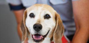 Post de Estás calculando mal la edad de tu perro: un año suyo no son 7 años de humano