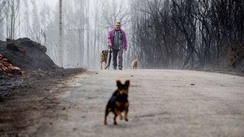Galicia se rearma para evitar un desastre incendiario en sus montes como el de 2017