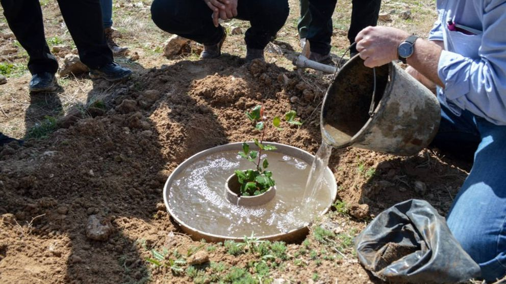 Un 'donut' de cartón: el invento para repoblar un enorme bosque de Palencia