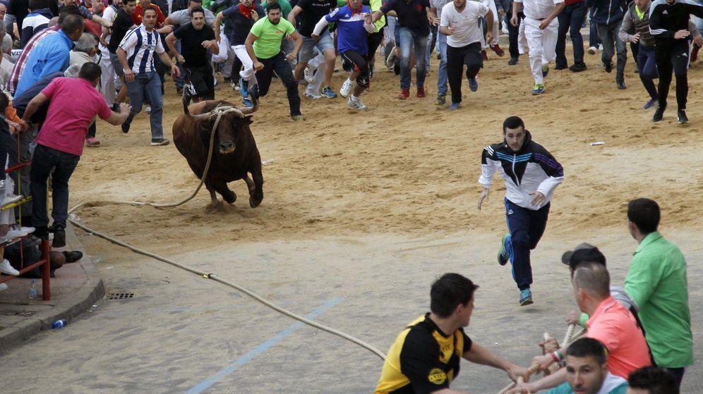 Foto: Carrera de 'toro enmaromado' en Benavente, Zamora. (EFE)