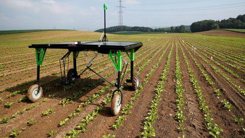 Este robot-fumigador acaba con las malas hierbas sin ayuda humana