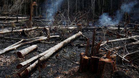Lo peor está por llegar. Todo lo que se esconde tras los incendios del Amazonas