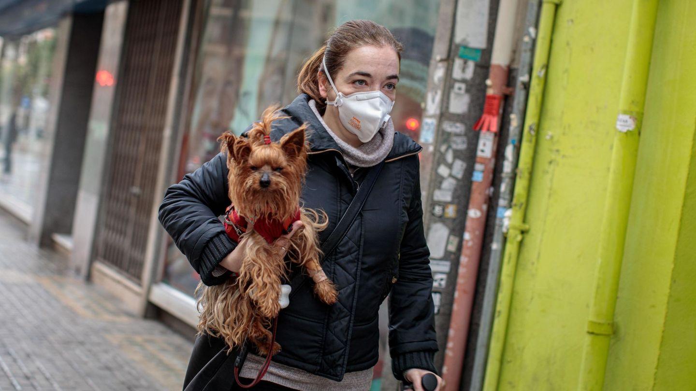 Perros y coronavirus. (EFE)