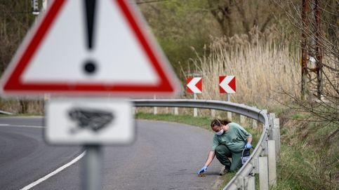 Cierran una calle en Estonia para ayudar a las ranas en su migración