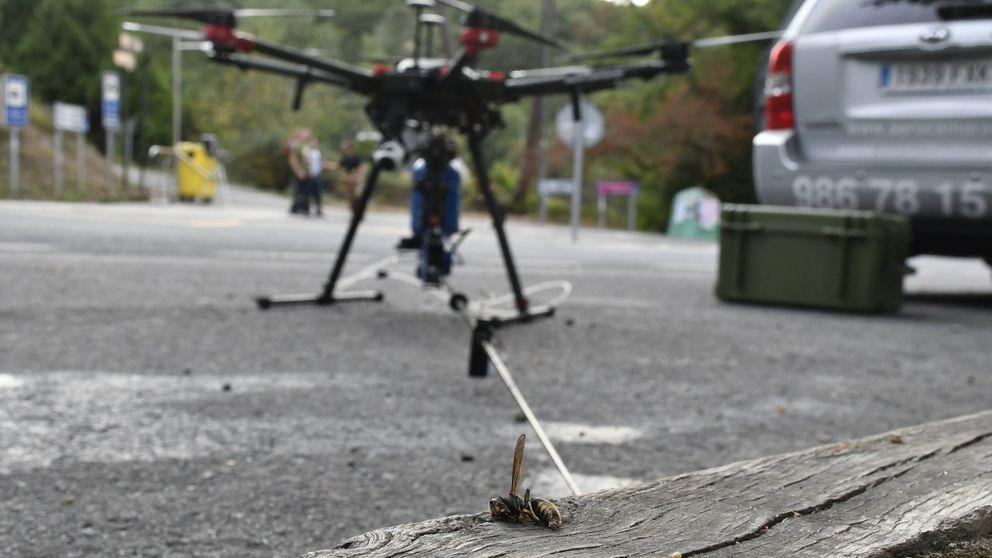 ¡Ataca a esto si puedes! Así se usa un dron para erradicar el nido de una avispa asiática