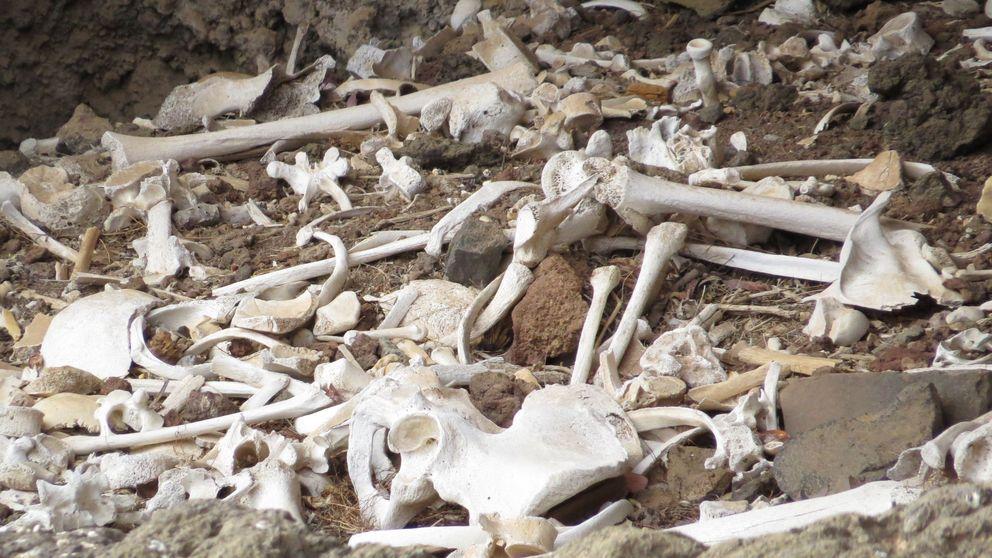 El sueño arqueológico de Canarias: encuentran intacta una cueva funeraria prehispánica