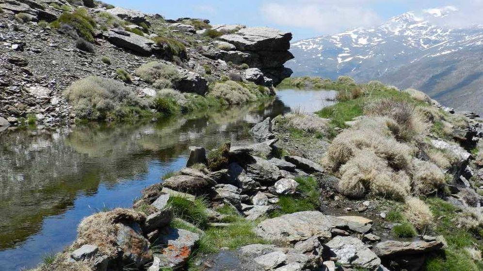Foto: Acequia de careo en sita en Sierra Nevada. (Universidad de Granada)