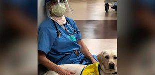 Post de Perros de terapia ayudan a animar a los sanitarios extenuados por el coronavirus