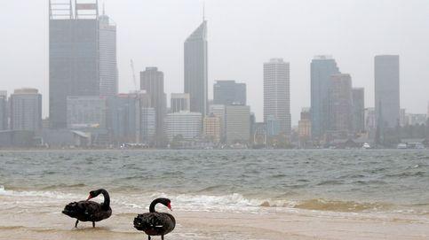 Dos cisnes negros descansan en la costa del sur de Perth (Australia)