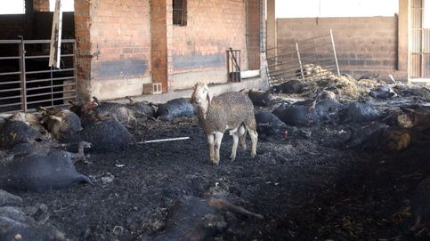 Resultado de imagen para el fuego de la Ribera d'Ebre, granjero