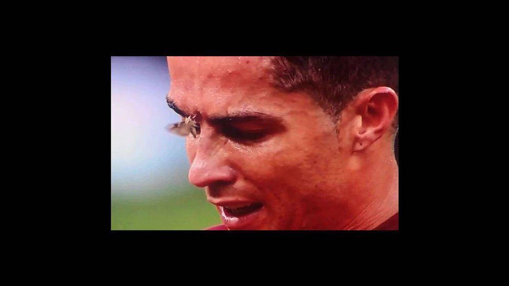 Foto: Una polilla se posó sobre la cara de Ronaldo durante la final de la Eurocopa entre Portugal y Francia
