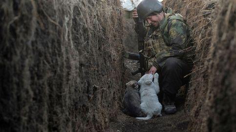 Cachorros en línea de guerra