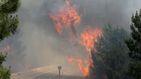 Las autoridades elevan a 61 los fallecidos en el incendio en el centro de Portugal