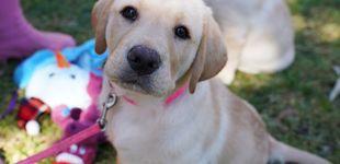 Post de Los ojos de tu perro han evolucionado para comunicarse mejor contigo