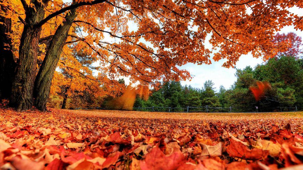 Del verde del verano al marrón del otoño: la química que cambia el ...