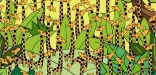 Post de Acertijo viral: ¿eres capaz de encontrar a la serpiente escondida entre las jirafas?
