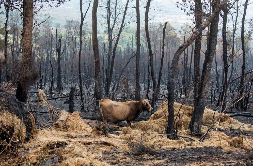 Foto: La Ley de Montes de Galicia prohíbe usar los terrenos quemados durante dos años. (EFE)