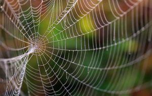 La tecnología más puntera toma a la naturaleza como modelo
