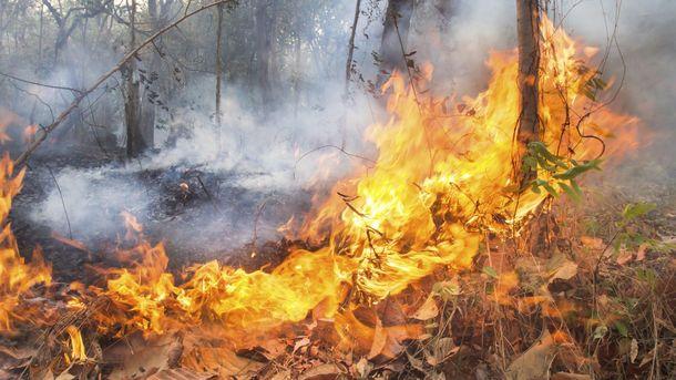 Foto: Las matemáticas ayudarán a predecir el tipo de incendio en cada paisaje
