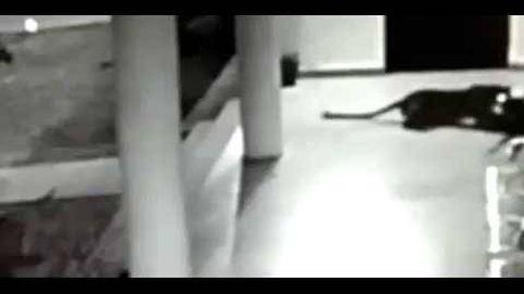 El momento en que una perra ataca a un leopardo que tenía preso a su cachorro
