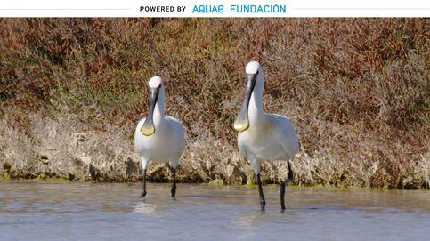 El español que aparece en 'El origen de las especies' dio nombre a esta ave