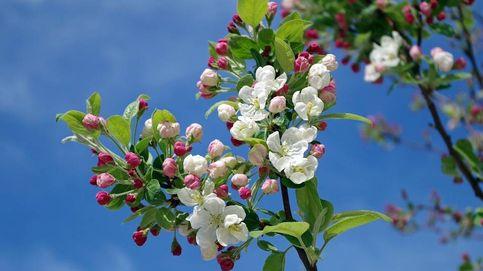 El equinoccio de primavera o cuándo empieza la estación más floral del año