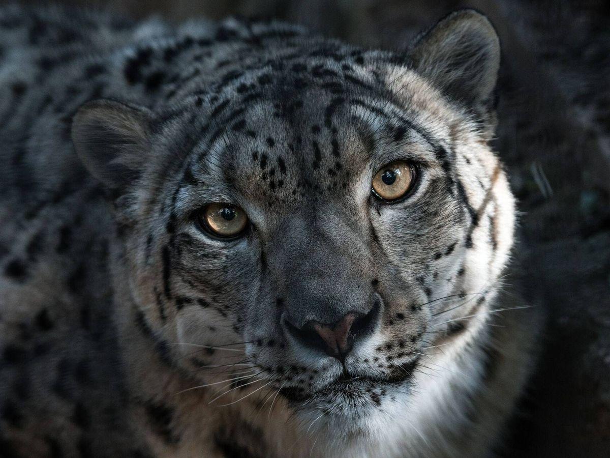 Foto: Leopardo (Unsplash)