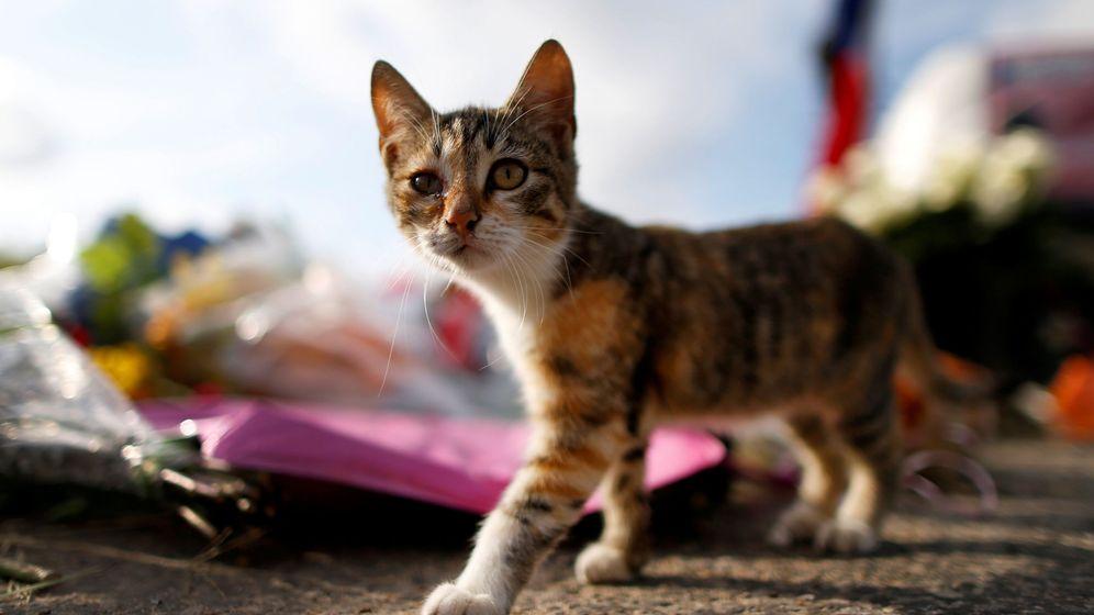 Foto: Las cifras hablan de 2.988 gatos sacrificados por el gobierno americano desde 1.982 (Reuters/Jonathan Bachman)