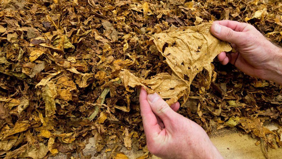 La Policía desmantela la mayor fábrica ilegal de tabaco intervenida en España