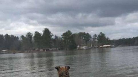 Aparece un perro callejero en su casa... lo que hizo restaurará tu fe en la humanidad