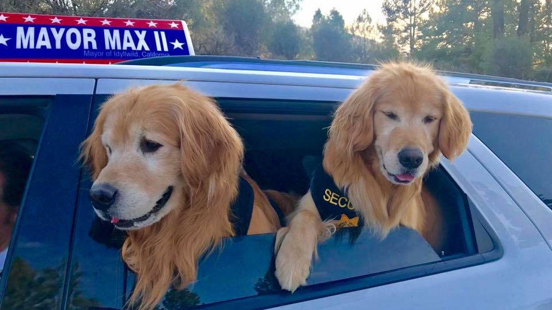 Mikey y Mitzi, los tenientes de alcalde de Max (Foto: Facebook)
