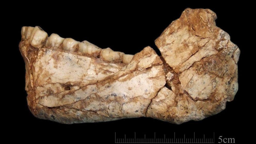 Una mandíbula traslada el origen del 'Homo sapiens' de Etiopía a Marruecos