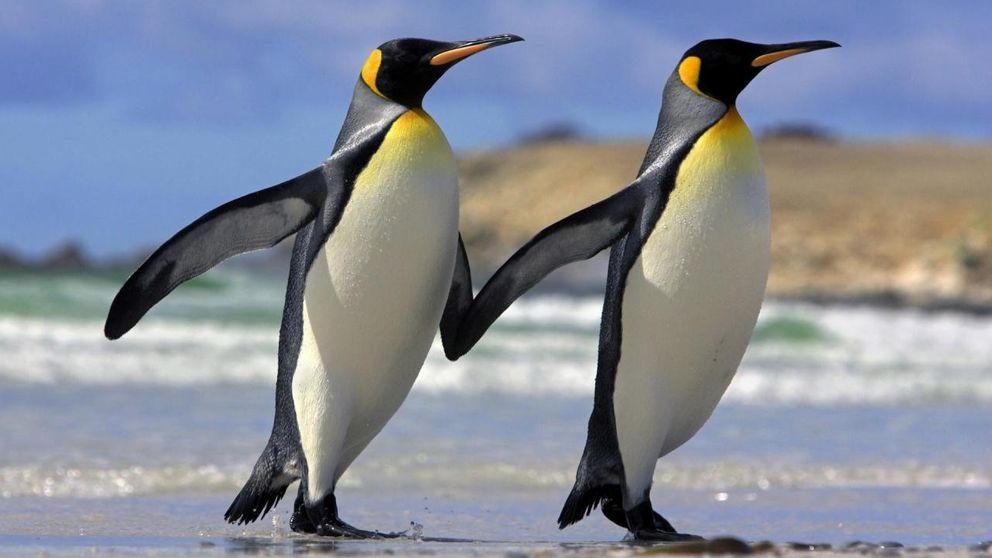 Necrofilia y pingüinos depravados: el sexo más raro del reino animal