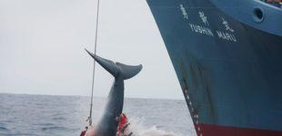 Post de Japón anuncia oficialmente que volverá a la caza comercial de ballenas en 2019