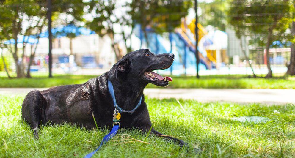 Foto: Los parques son el lugar de recreo preferido para el mejor amigo del hombre. (Robyn Arouty)