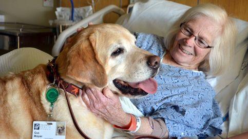 Perros en los hospitales: Aguado (Cs) se saca de la manga la madre de todas las polémicas