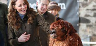 Post de Una granjera llamada Kate Middleton: su divertido encuentro con una alpaca