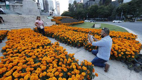 Ciudad de México prepara 260.000 flores para el día de los muertos. (EFE)