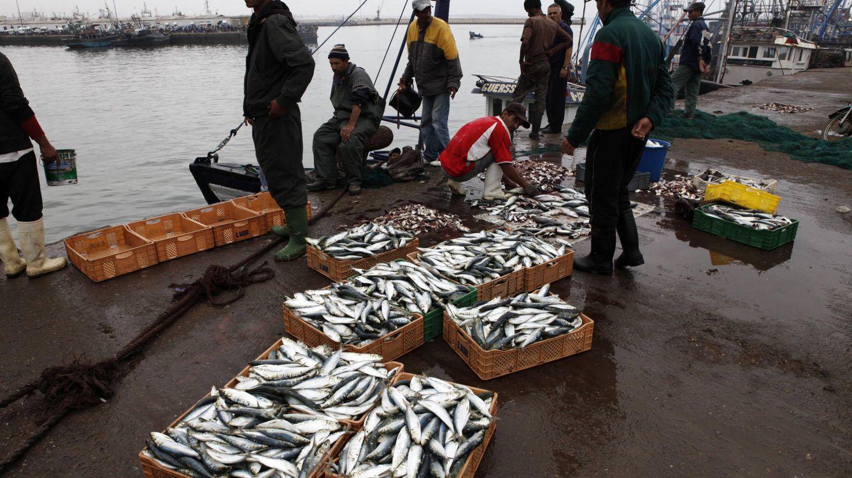 La justicia de la UE puede anular el acuerdo pesquero con Marruecos por el Sáhara