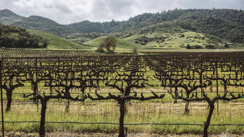 Foto: Los viñedos de la bodega Newton han obtenido el certificado de ecosostenibilidad Napa Green. (Marc-Oliver Le Blanc)