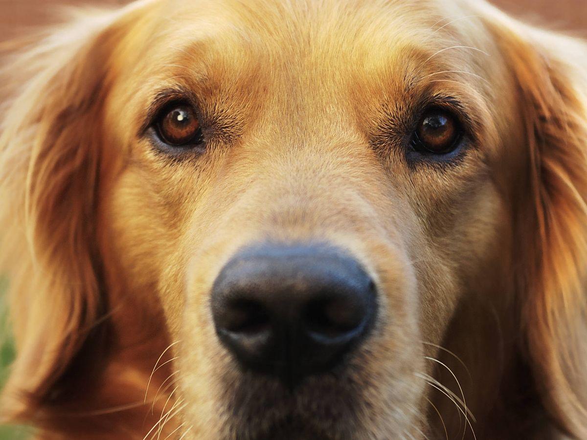 Foto: La verdad sobre cómo ven el mundo los perros (iStock)