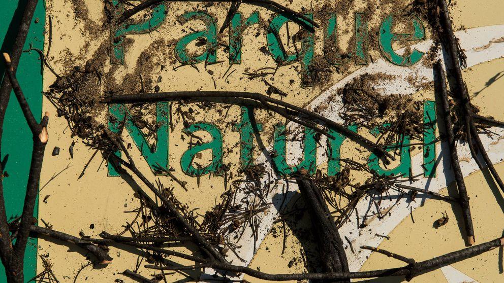 Verano en Doñana: la porquería del acuífero e invasión de cangrejos