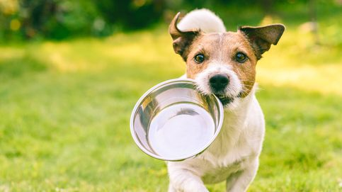 La comida que podría provocarle a tu perro un infarto