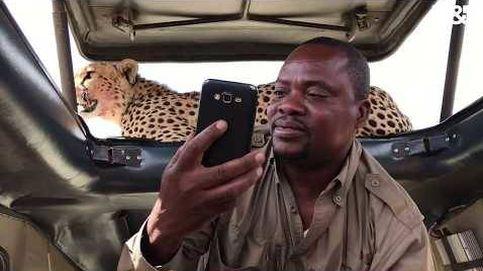 Un guepardo asalta su coche y terminan haciéndose 'selfies'