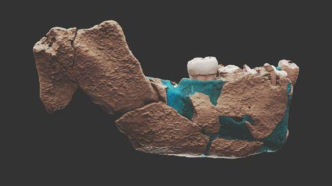 Hallazgo histórico en Israel: un desconocido homínido para explicar la evolución humana