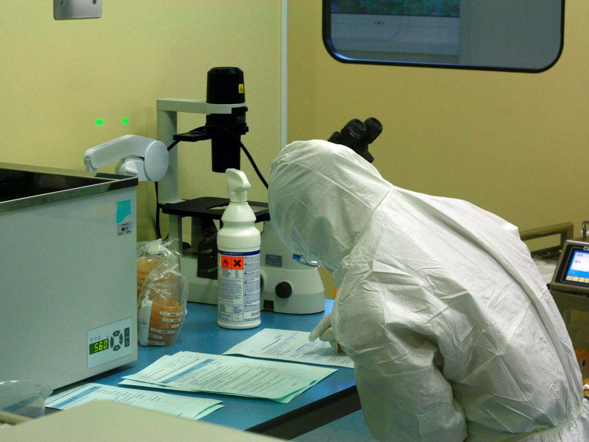 """Foto: La OMS insiste en que """"todas las pruebas"""" apuntan a un origen animal del coronavirus. (EFE)"""