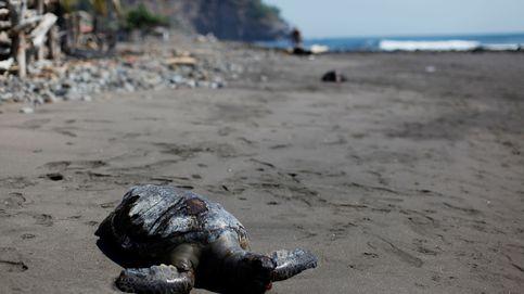 El misterio de las tortugas envenenadas en las playas de El Salvador